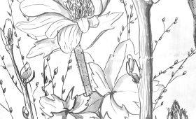 Garlic Mustard, Sunflowers