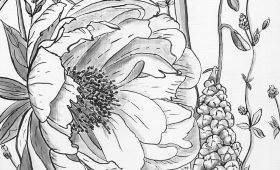 Peony, Hyacinth, Spiderwort