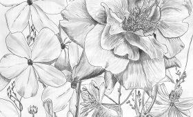 Rose, Phlox