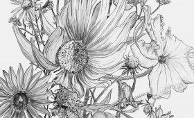 Sunflower, Squash Blossom
